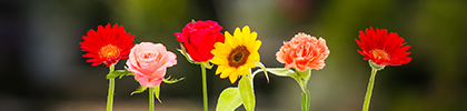 プロポーズに贈る花の選び方
