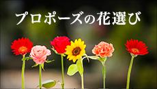 プロポーズの花選び